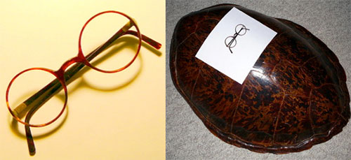 42ca7120a8 One could get quite a few tortoise shell frames from this tortoise shell